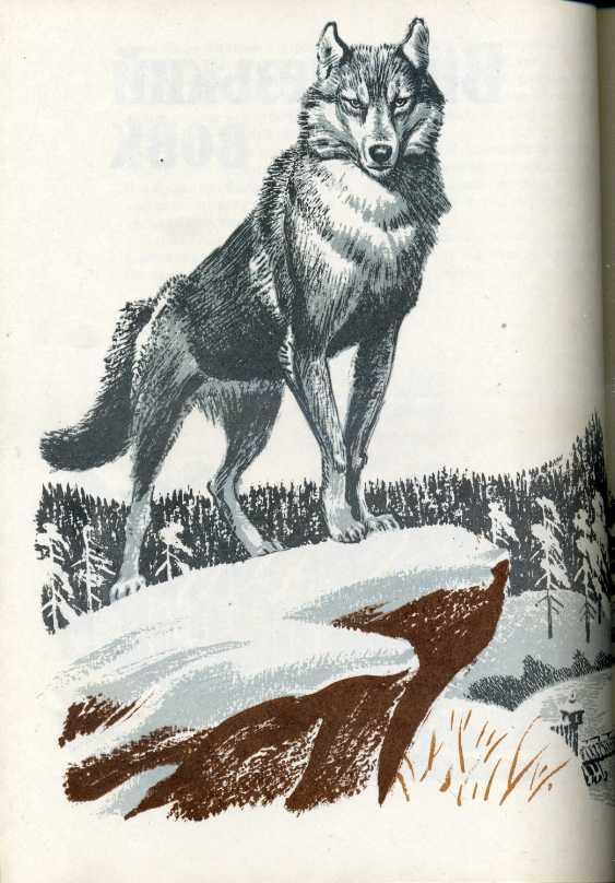 иллюстрации к рассказу снап сетона томпсона олд скул